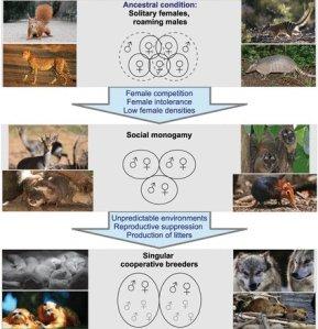 An evolutionary